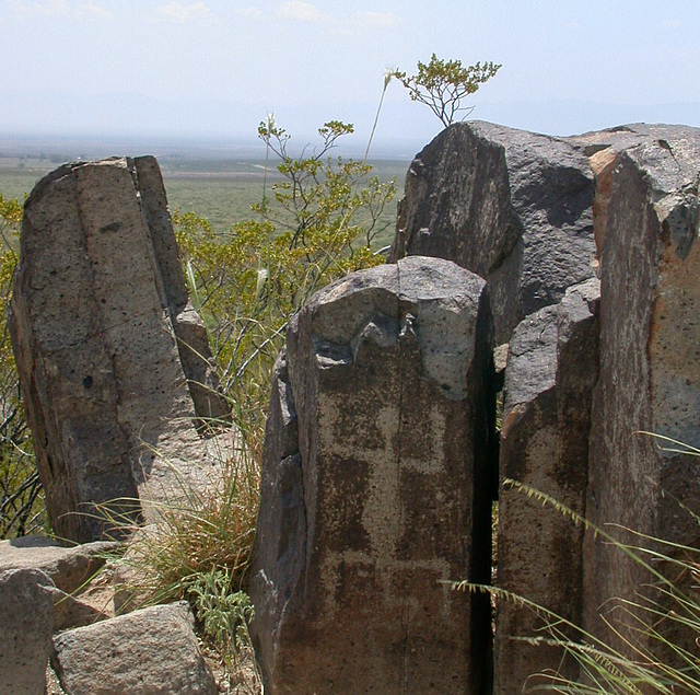 Three Rivers Petroglyphs (3250)