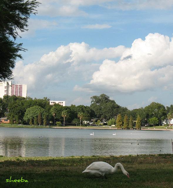 Peaceful view across Lake Morton..