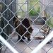 bear14f