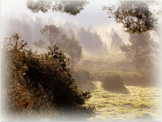 ...la forêt de Luminy,ce matin...