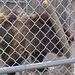 bears8f