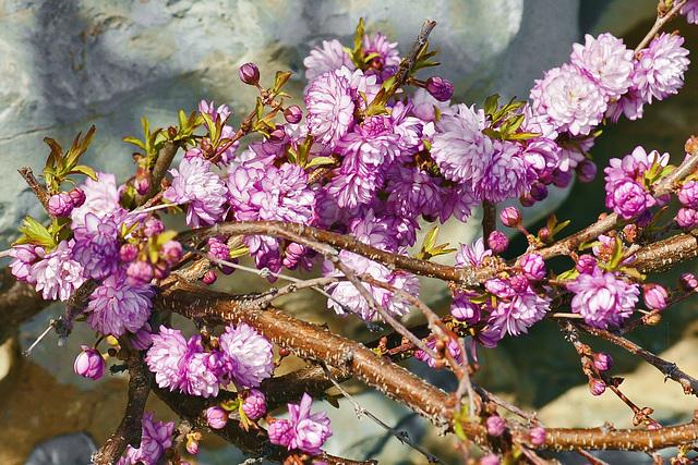 Honey from the Rock – National Arboretum, Washington, DC