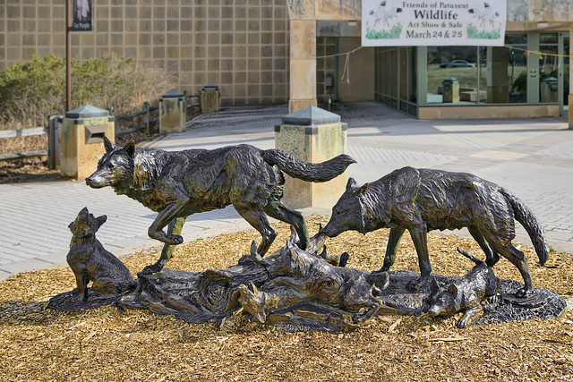 Timber Wolf Family Sculpture – Patuxent National Wildlife Refuge, Laurel, Maryland