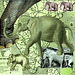 elephants for colleen