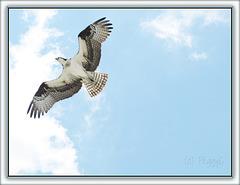 Fish Flight . .