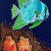 angelfish & orange sea squirts