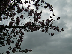 Ciel gris et pluie ce matin...