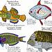 28 days of fish: 26-28