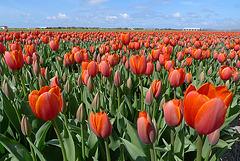 Nederland - Zijpe