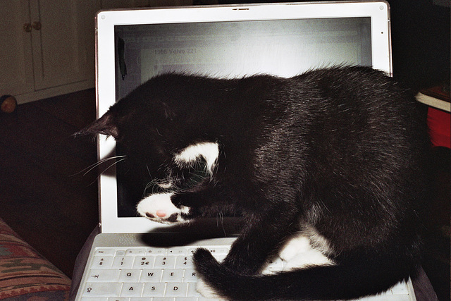 Cat and iBook