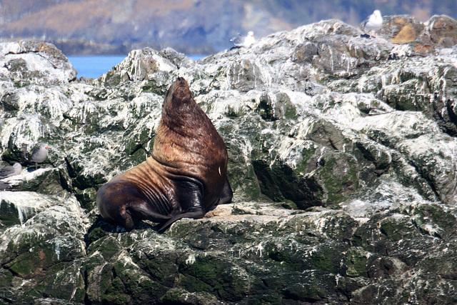Sealion at Mermaid Rock