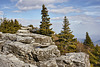Bear Rocks #1 – Dolly Sods, West Virginia