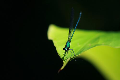A friend on a leaf
