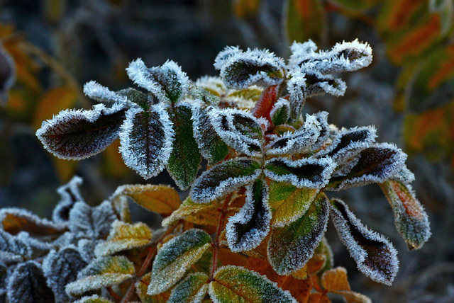 December Frost