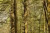 Jacob's Ladder – Blackwater Falls State Park, Davis, West Virginia