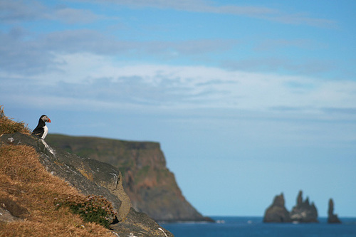 Puffin looks out over a fabulous view.
