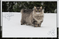 Ralphi in the snow