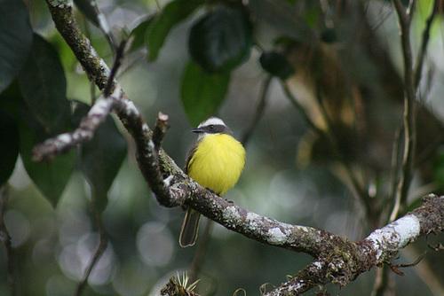 Unidentified, but very cute, bird