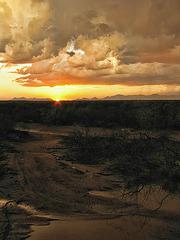 Monsoon Mud Puddle
