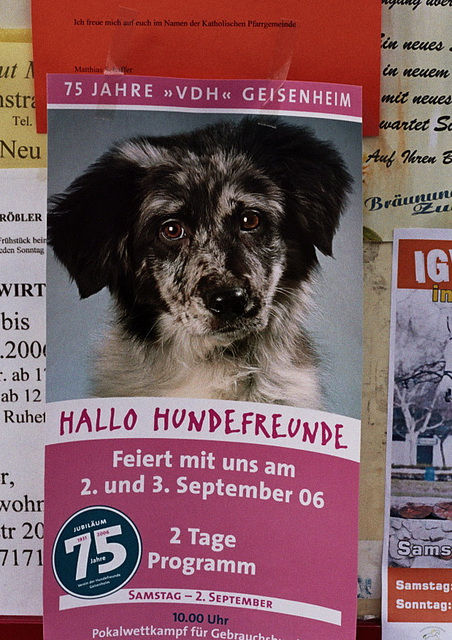 Visiting the Rhine valley in Germany: Hallo Hundefreunde