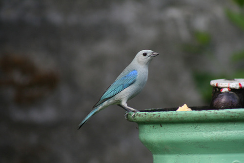 Bird, garden