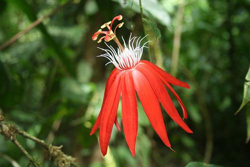 A rainforest flower