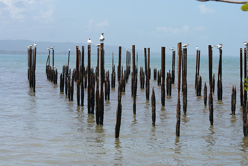 Sea Birds on Perches