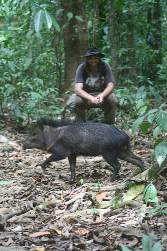 Peccary dashes across the trail