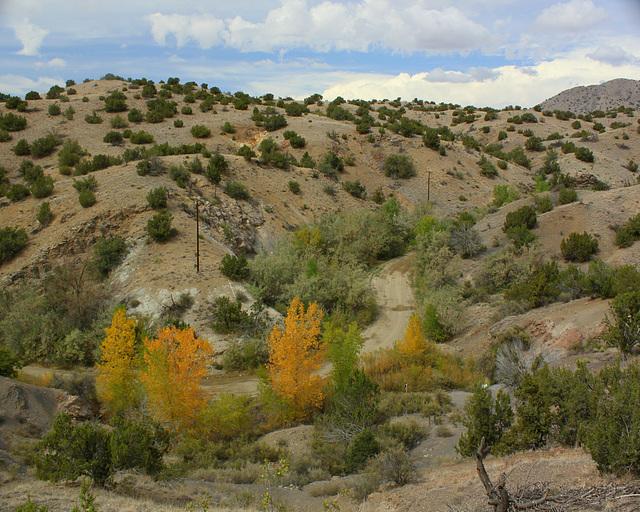 Three trees, Cerillos Hills