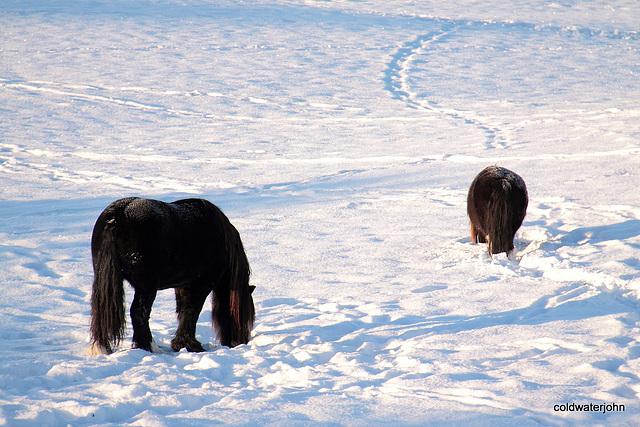 Snow pasture 5241869380 o