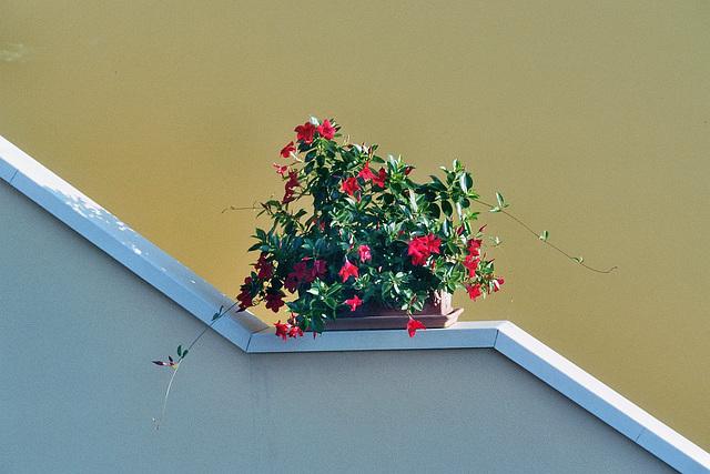 Flowers on a Hand Rail