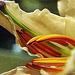 Fractalian Series - Flower detail