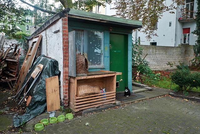 katzenhaus-1190753-co-14-09-14
