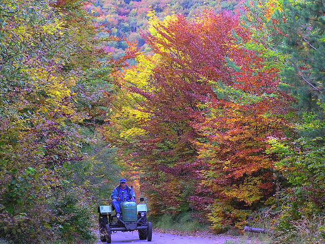 Tractor drivin' in autumn forests