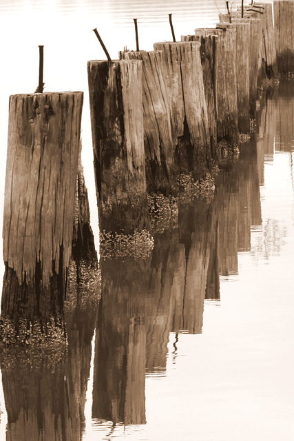 Old pilings, Neuse River