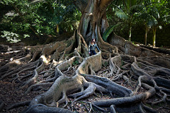caught_in_roots