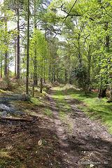 Blervie Mansion estate track through the woods.