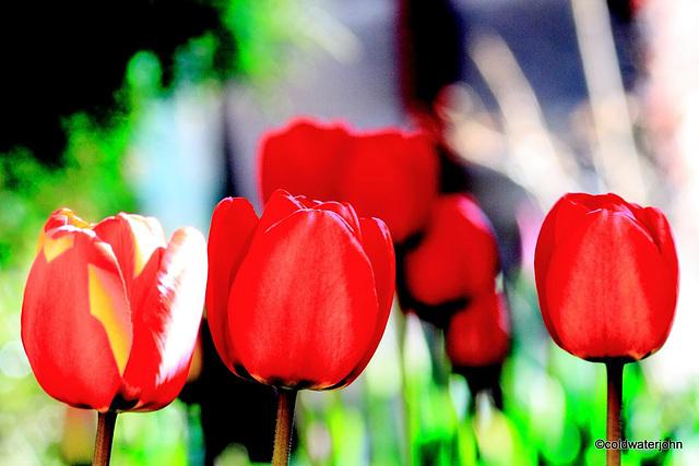 Sunny Spring Sunday Morning
