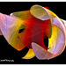 Multifarious fractal ;-)