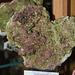 Vésuvianite du Canada - Asbestos  (2)