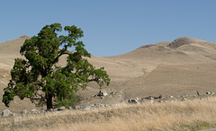 Kern County CA-243 (1525)