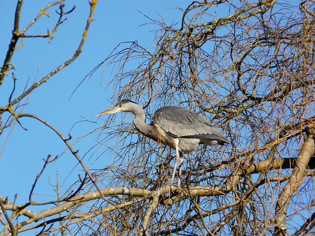 Hastings Wildlife
