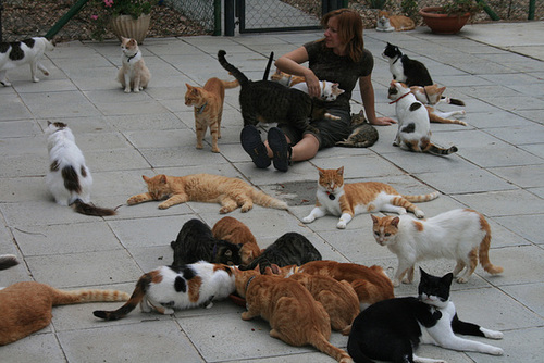 Cyprus – A Land For Cat Lovers