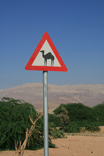 Common Road Sign, Jordan