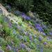 Olympic Flower Garden