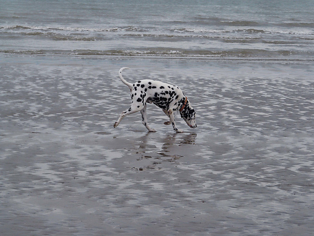 Spotted On Beach