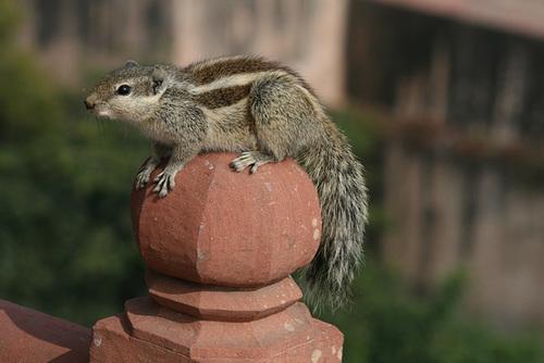 Squirrel Strikes A Pose