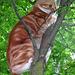 Chompuss in the tree