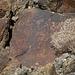 Petroglyph (085507)