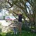 Luca and the tea tree